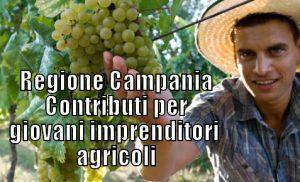 Campania-Contributi-giovani-imprenditori-agricoli