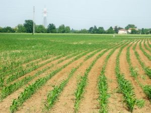 Contributi-agricoltura-marche