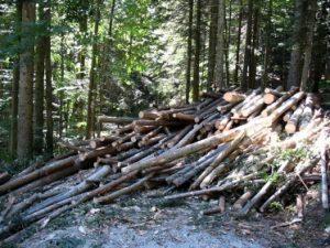 contributi-prodotti-forestali-friuli-venezia-giulia