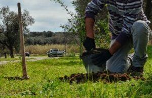 Abruzzo-contributi-forestazione-e-imborschimento