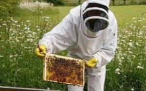 apicoltura-regione-lazio