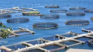 acquacoltura-contributi-sicilia