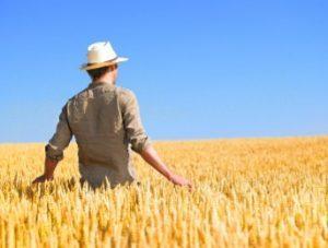 sardegna-contibuti-agricoltura