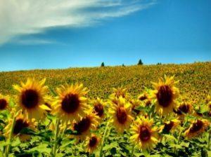 contributi-agricoltura-molise
