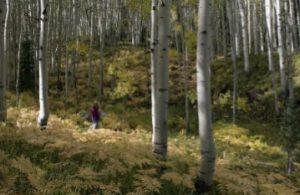 foresteinlombardia